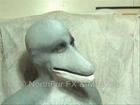 Dolphin Muzzle