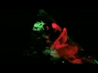 Dita Von Teese - Crazy Horse 07