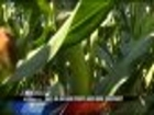 Why Do Dryland Crops Need More Moisture? -- Alicia Myers Reports 10 PM