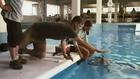 Première bande-annonce pour Dolphin's Tale de Charles Martin Smith